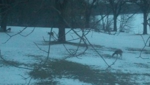 Deer at the Lake